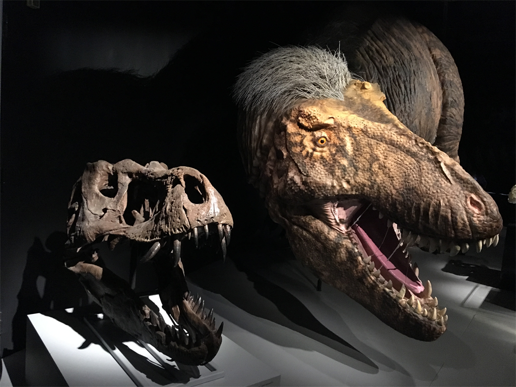 325b0578c0084e37b9848e46017c7b02 - Paleontologists Discover Worlds' Biggest And Longest-Lived T. Rex