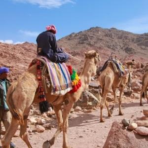 pilgrimage, camels