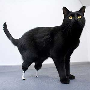 Animals With Prosthetic Limbs Health24