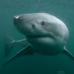 Groot wit haaie verdwyn uit Kaapstad en niemand weet hoekom nie - Fin24