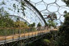Eden Project Rainforest Canopy Walkway
