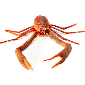 Crayfish, natural source of glucosamine sulphate