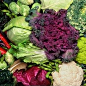 vegetables,vegetarian,health risks,osteoporosis,z