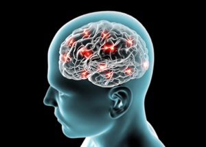 Brain neurons, synapses, reasoning from Shutterstock