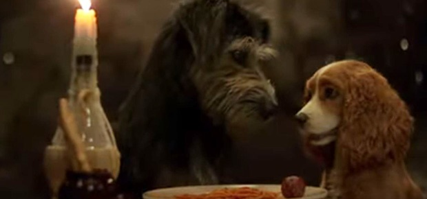 Channel24.co.za | WATCH: 'The Lady and the Tramp' is so oulik soos altyd in die sleepwa vir die live-action-film
