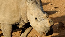 HEADLINES: Tembisa, rhino poaching & accidental shooting