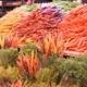 MasterChef SA: Episode 5 - A Carrot Affair
