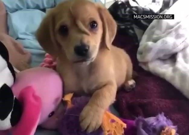 News24.com | TOO CUTE | Rescued puppy has an extra tail on forehead