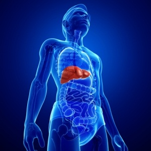 Male liver anatomy from Shutterstock
