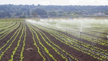 South Africa must support land reform projects - farmer