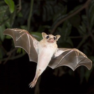 Humans develop bat-like radar