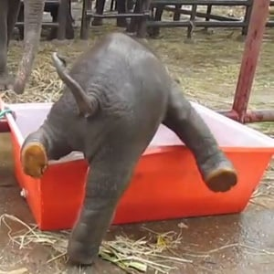 Zim vets treat 'rescued' elephant calf for leg fracture | News24