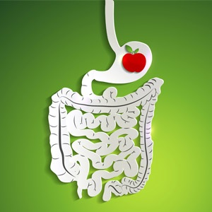 image of digestive system