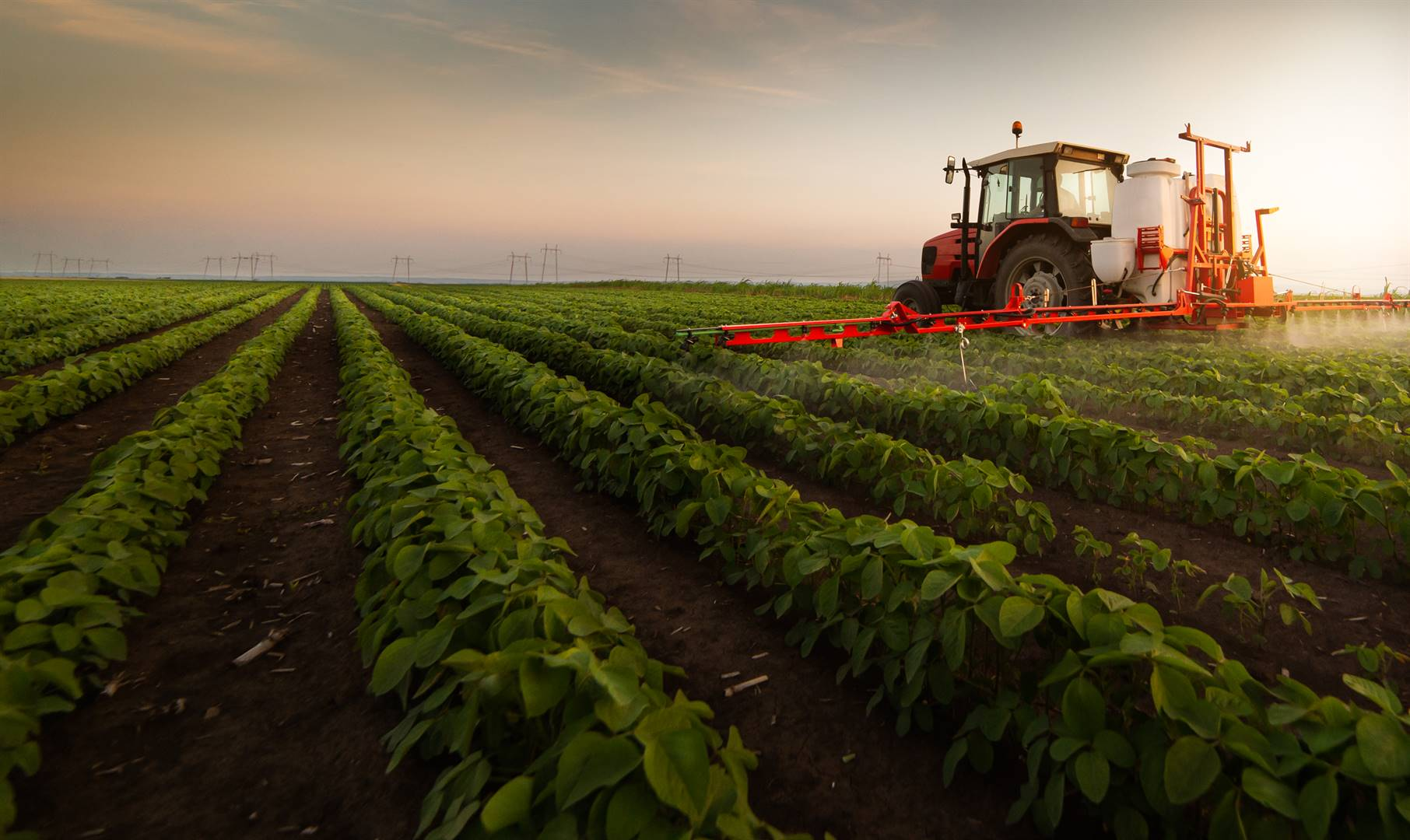 This is a typical South African land reform story characterised by infighting among claimants who have seen productive agricultural land lying fallow or established tourism businesses crumbling. Picture: iStock/Gallo Images