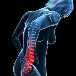 osteoporosis,back,leg,thigh,knee,vegetarian,body,