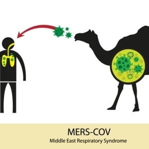 Mers Outbreak In South Korea Infects 10 Health24