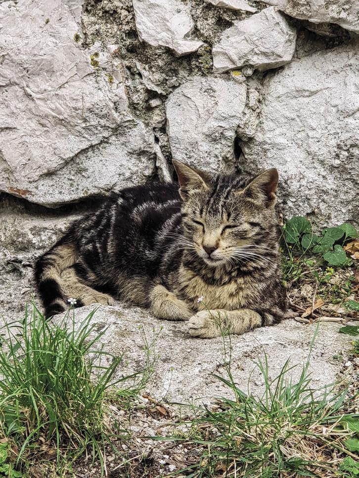 'n Vriendelike Kroatiese kat