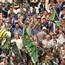 SA Rugby, minister vra vir 50% toeskouers by Leeus-wedstryde
