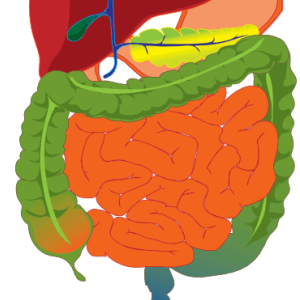 Image of a healthy gastrointestinal tract