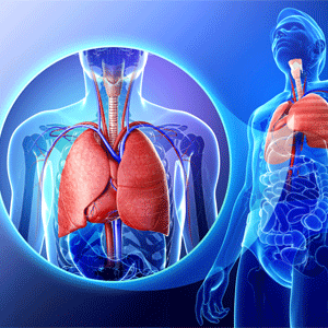 The anatomy of asthma in the lungs