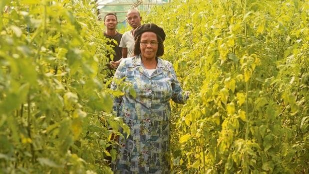 Einah Ntombela (front) with Sabelo Mbense and Lindokuhle Magwaza (at the back), inside the tomato hothouse that they will soon harvest from.