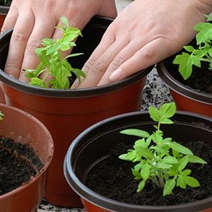 herbs, garden, home and away