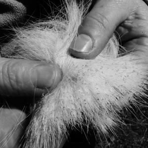 Lice found in animals