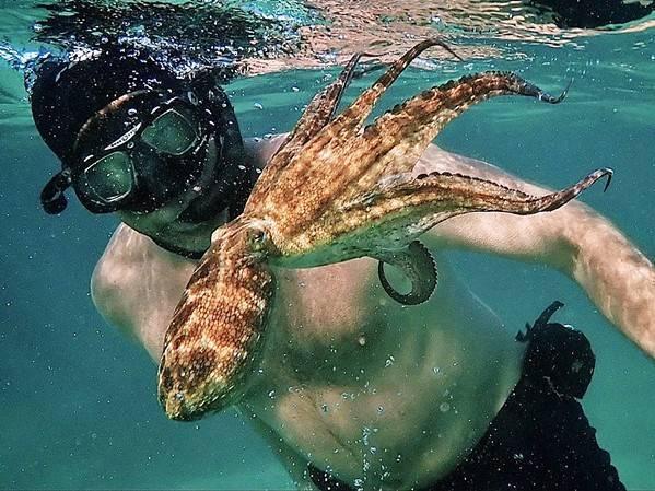 Craig Foster met die seekat wat in Valsbaai sy hart verower het. Die Oscar-bekroonde 'My Octopus Teacher' is nog in Suid-Afrika op Netflix beskikbaar.  Foto: Sea Change Project
