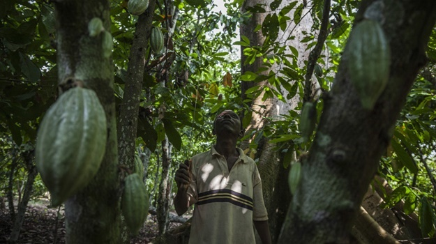 Millions of small farmers in Ivory Coast and Ghana, which together grow 60% of the world's cacao, live in grinding poverty.