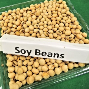 Soy is good for you