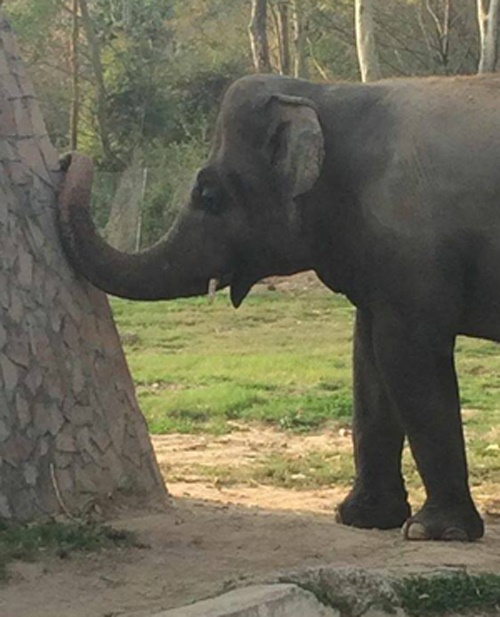 The lonely elephant Kavaan in his enclosure in the Islamabad Zoo in Pakistan.(Free Kavaan the Elephant, Facebook)
