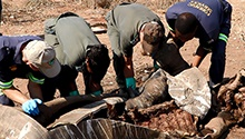 How a poaching crime scene is processed
