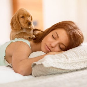 Cute spaniel cuddling with woman in bed