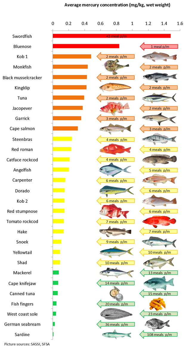 See potentially dangerous mercury levels in sa retail for Fish with high levels of mercury