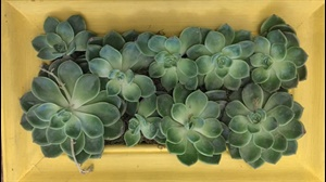 How to create a pretty succulent frame