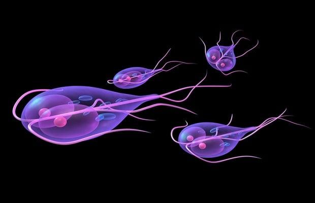 giardiasis bacteria