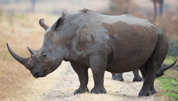KZN reserves braced for increase in poaching as ban on rhino horn sales continues to fail dismally.