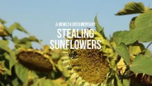 STEALING SUNFLOWERS: Watch News24's documentary on race relations in Coligny