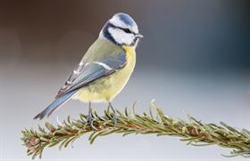 bird, animal names