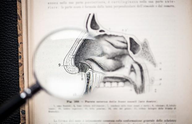 nose diagram