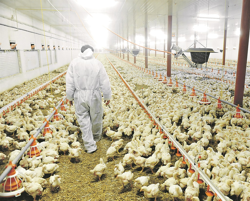 SA's poultry industry on the road to recovery | Fin24