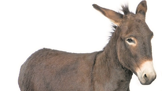 The number of donkeys that were thought to have been skinned alive, allegedly for the Chinese medicinal market, has risen from 18 to 35.
