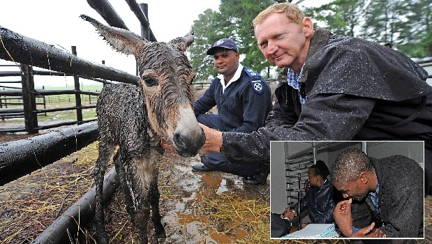 SPCA staff Nazareth Appalsamy (left) and Garth Nortje comfort a foal at the Sani Pass SPCA on Monday. The foal was born hours after the donkeys were impounded. INSET: Mati Makatsu and morena Dlomo appeared at the Himesvelle Magistrate's Court on Monday.