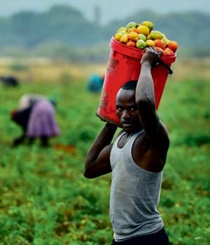 The UIF and IDC partnership has provided and saved jobs in many sectors, including agriculture PHOTO: Leon Sadiki
