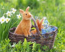 bunnies playing in wicker basket
