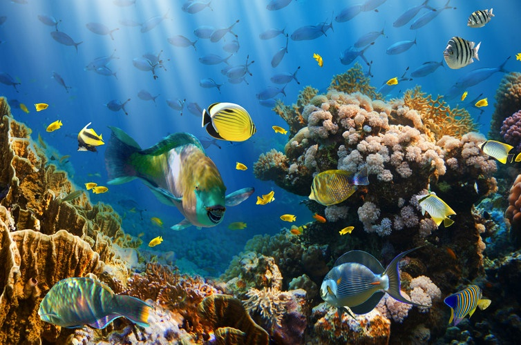 There are a number of ways the global community can protect the oceans. Picture: Shutterstock