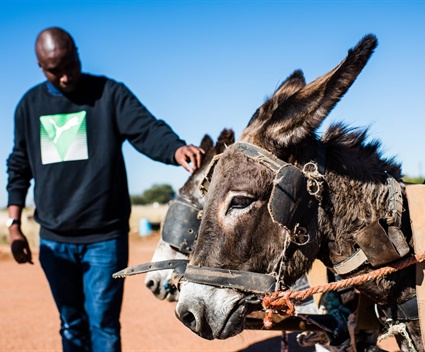 Cleaning up the environment. One donkey at a time