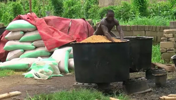 rice farming and rice smuggling