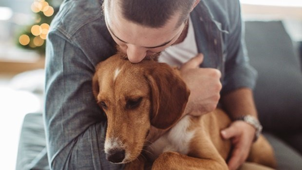 How to tell if your dog is faking a cough | Health24