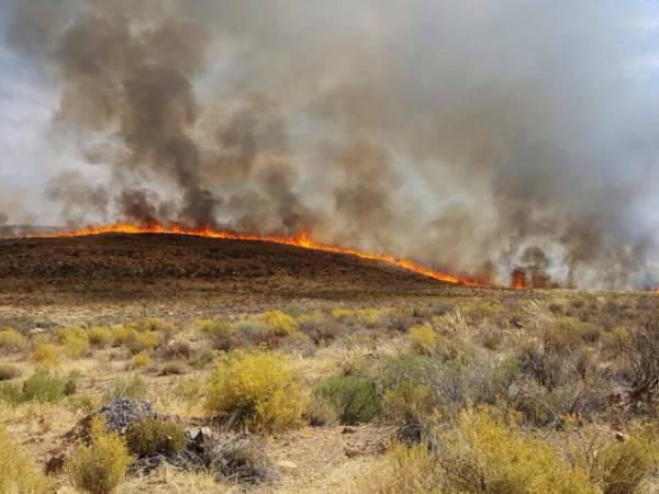 Plase in die Calvinia-distrik is deur verwoestende brand getref. Foto: Verskaf